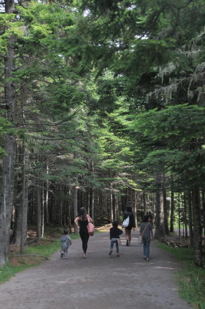 fundy hike