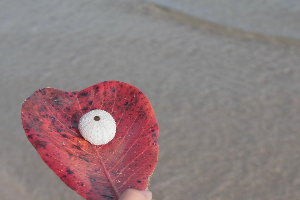 urchin in heart