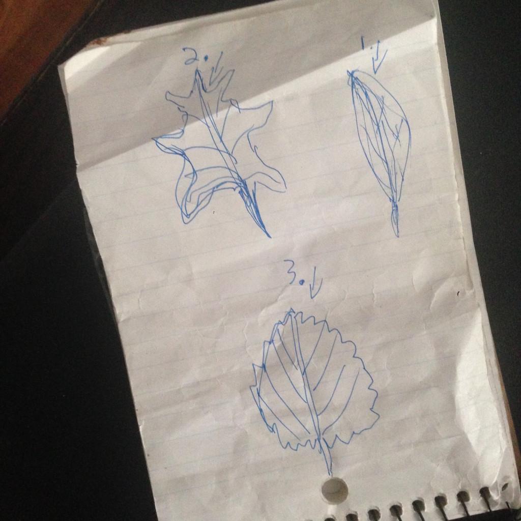 3_leaves
