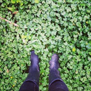 Nikki_boots