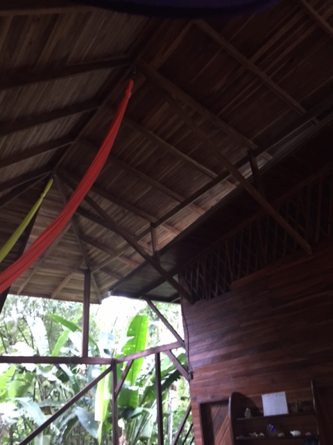 jungle yoga home